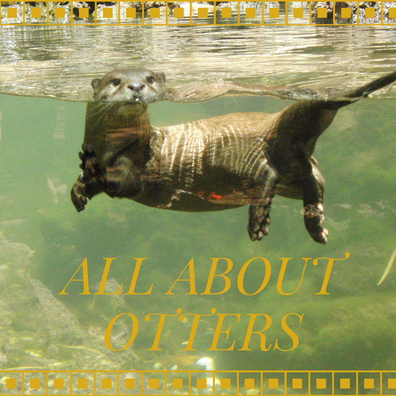 The Adventures of Marisol Holmes: All About Otters