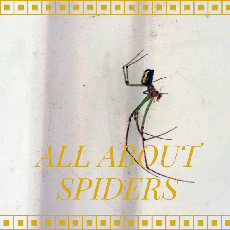 The Adventures of Marisol Holmes: All About Spiders